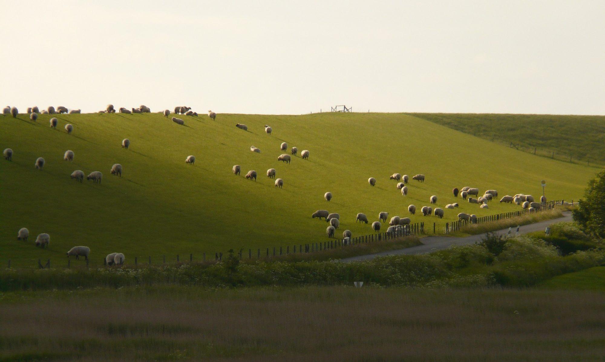 Agrarische Jongeren Friesland